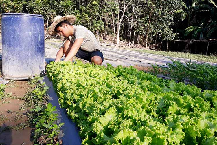 'Pick and pay' lettuce: From farm to table
