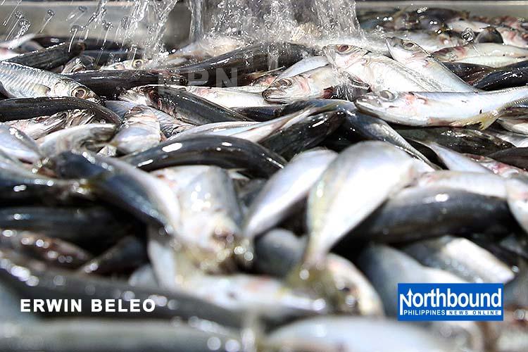BFAR eyes more 'galunggong' imports