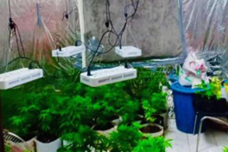 British national, live-in partner nabbed for growing marijuana