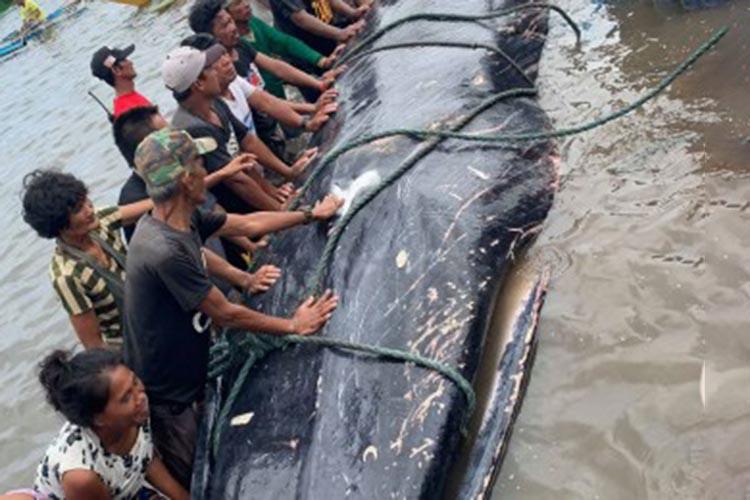 Large fishes thrive near Gigantes Island