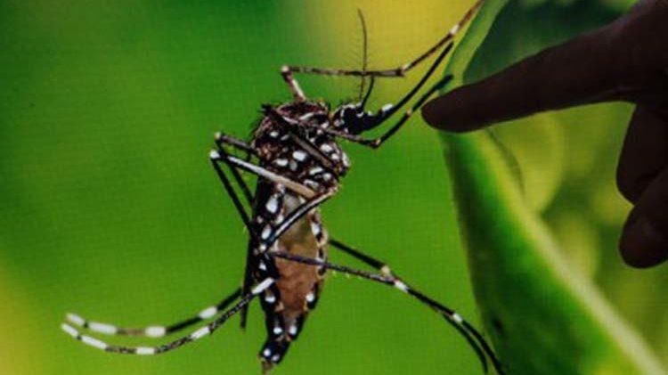 Dengue cases in Baguio, Kalinga drop: DOH