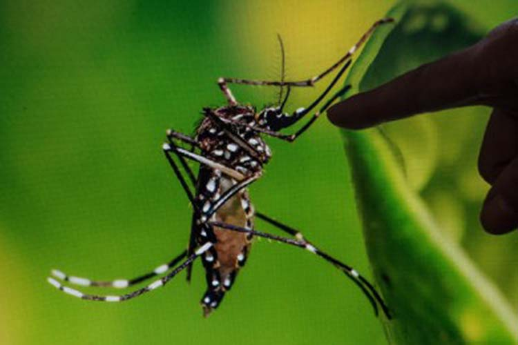 Dengue cases up 10% in Pangasinan