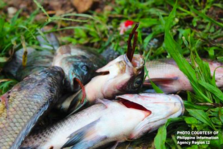 Isabela fishpond owners report fish kill due to drought