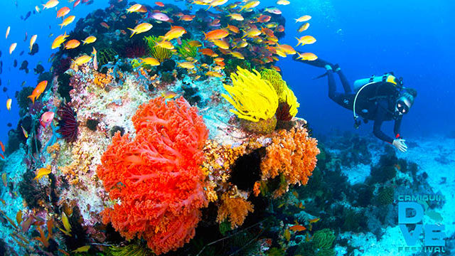 Dive tourism, the next big thing in Camiguin