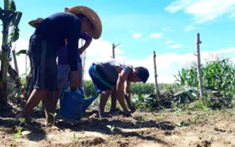 Pangasinan town promotes community gardening