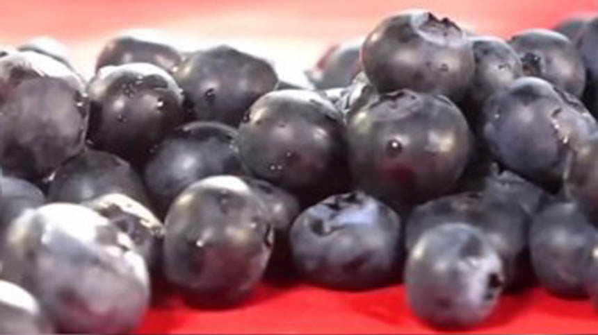 New studies show diverse benefits of eating blueberries