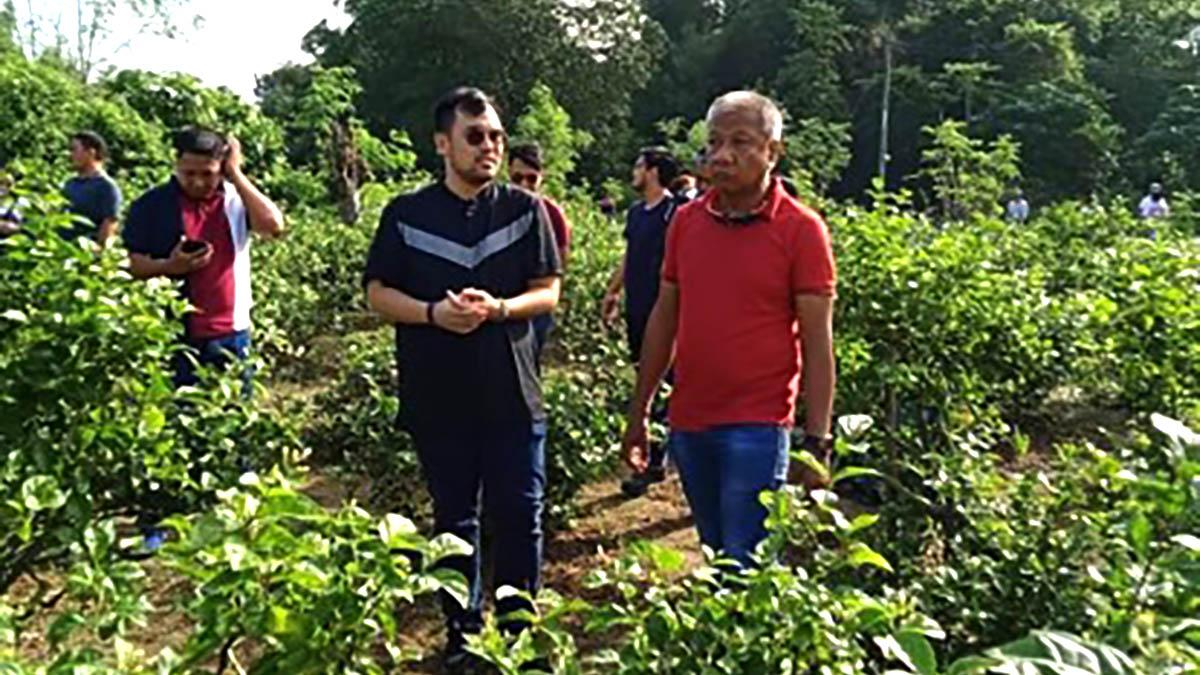 Pangasinan's sampaguita farms eyed as agri-tourism spots