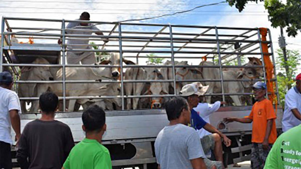 Livestock-raising to boost Ilocos farmers' livelihood