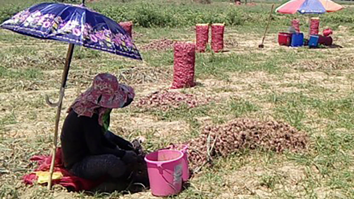 Farmers, execs in Nueva Ecija buck import of onion